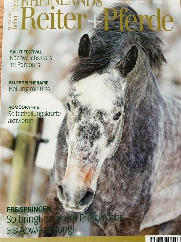 weißer nasenausfluss pferd