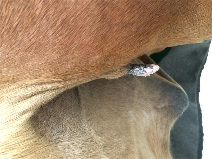 unterstützungsband verletzung pferd